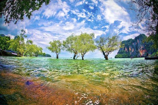 Railay Beach - Krabi - Thailand - Wandervibes - trees in the ocean