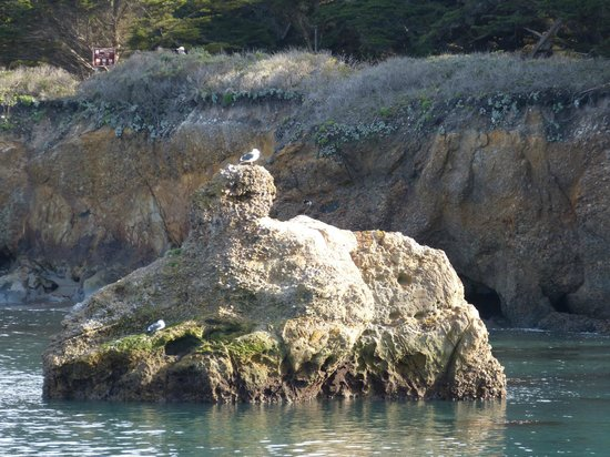 Point Lobos State Reserve : Whaler's Cove