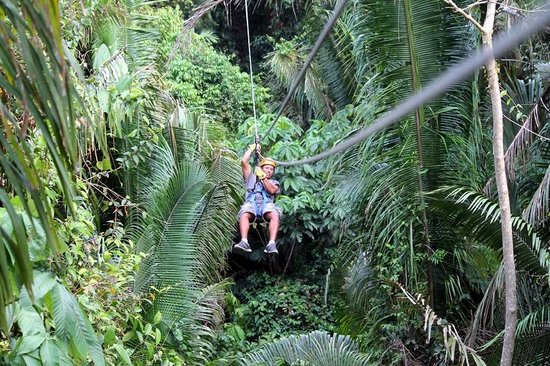 Bocawina Rainforest Resort & Adventures: Ziplining
