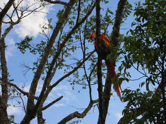 Essence Arenal Boutique Hostel : Macaw Greeter