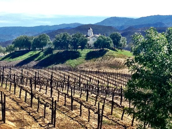 Leoness Cellars: View from the tasting room