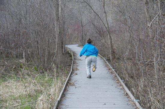 Wehr Nature Center: wooded boardwalks go through wetlands