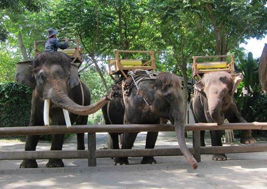 Elephants - Picture of Bali Zoo, Sukawati - TripAdvisor
