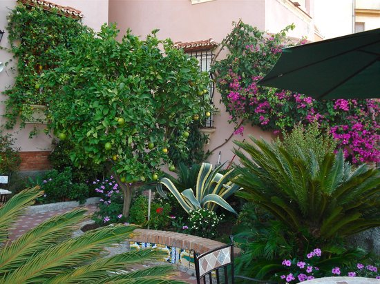 Hotel Monte Victoria: Terrace