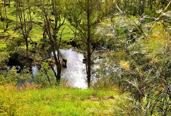 Barrington Hideaway: Cows bath time