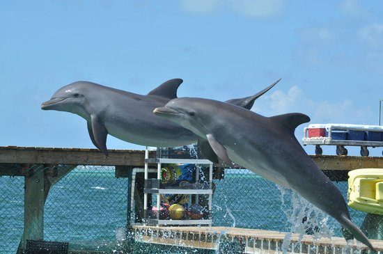 Dolphin Discovery : Loved seeing the dolphins up close!