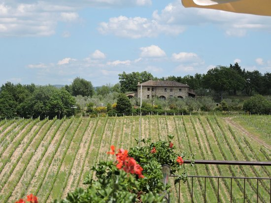 Tuscan Wine Tours by Grape Tours: Grapes as far and the eye can see