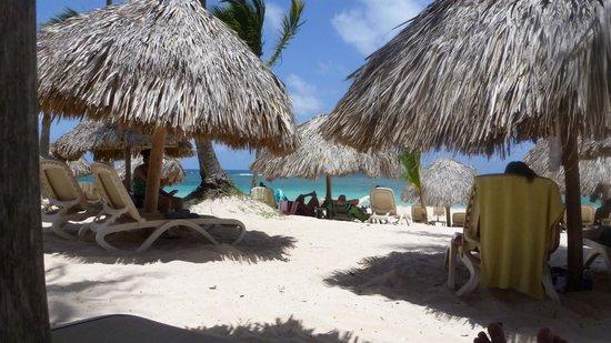 Majestic Colonial Punta Cana : olha os bangalôs da praia...todos com espreguiçadeiras super confortáveis