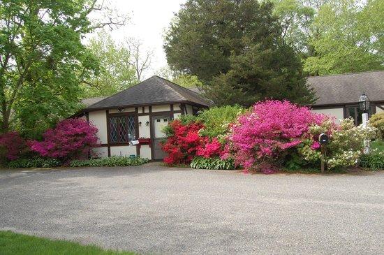 Earl of Sandwich Motel : The blooms were beautiful