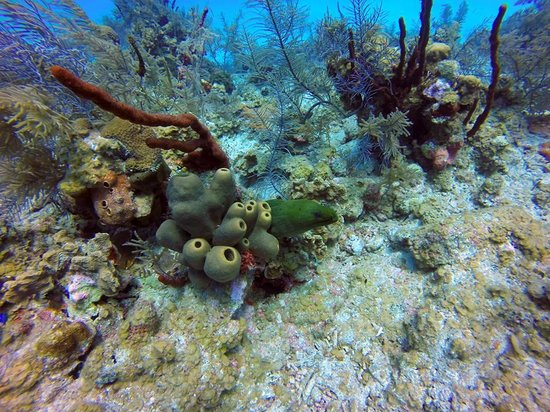 Divetech: Reef photo with Green Moray Lighthouse Point