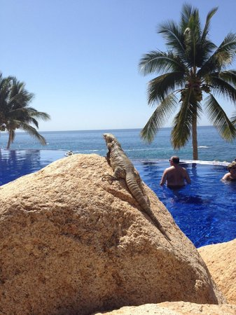"""Grand Fiesta Americana Los Cabos All Inclusive Golf & Spa: A """"guest"""" sunning himself near one of the infinity pools"""