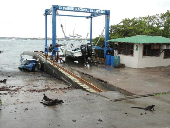 Charles Darwin Research Station: Boat Launch, look for marine iguanas