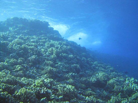 Prodiver Maui: Ene Nui, Molokini