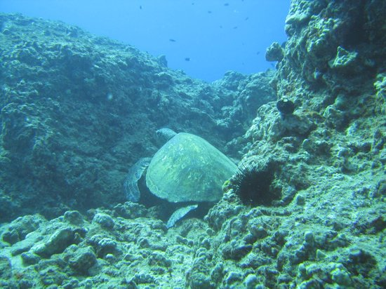 Prodiver Maui: Five Graves