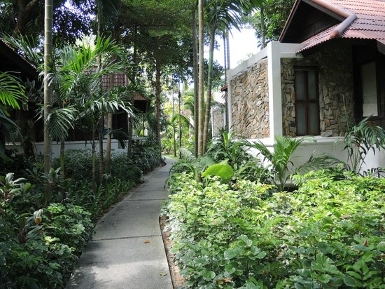 Peace Resort: Typical View around Cabins