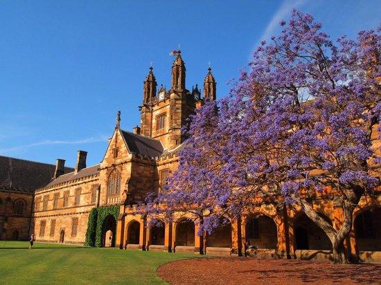 """sydney university""的图片搜索结果"
