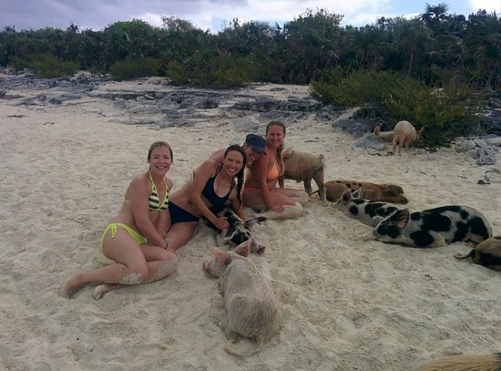 Coastline Adventures Exuma: Friends at the pig beach on Big Majors.  The small ones were friendly bit the large pigs snapped
