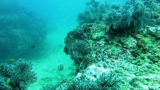 Doongi Dives