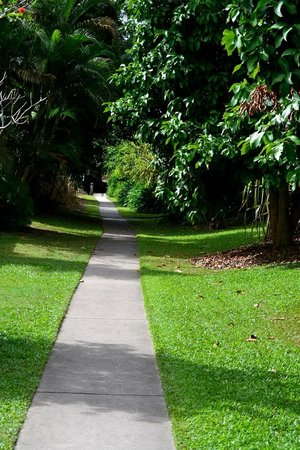 At the Mango Tree Holiday Apartments: Walkway to the beach.