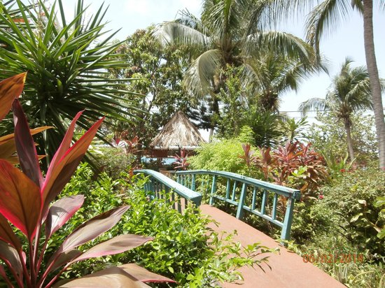 Island Beachcomber Hotel: stroll over the bridge to the beach bar
