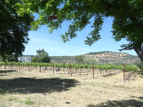 Frog's Leap Winery: vineyards