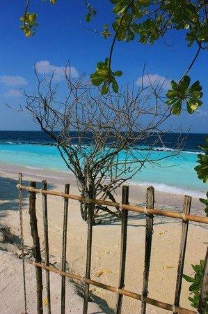 Royal Island Resort & Spa: вид напротив ресторана \ near the restoraun