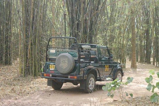 Royal Tiger Resort: Safari - Gypsy