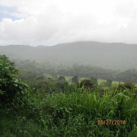 Carabali Rainforest Park : Beautiful rain forest park