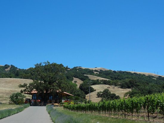 Hanna Winery: driving up to the winery