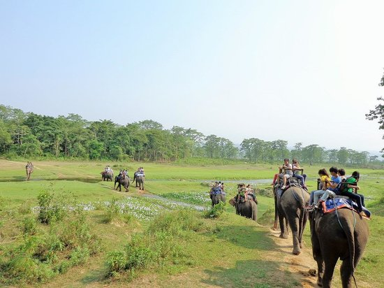 Chitwan Village Resort: The group heading out on their Safari