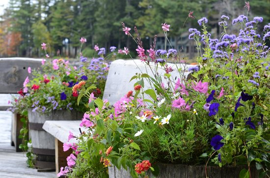 Migis Lodge : bench on dock with flowers