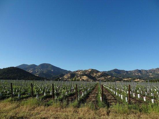 Chateau de Vie : vineyard views
