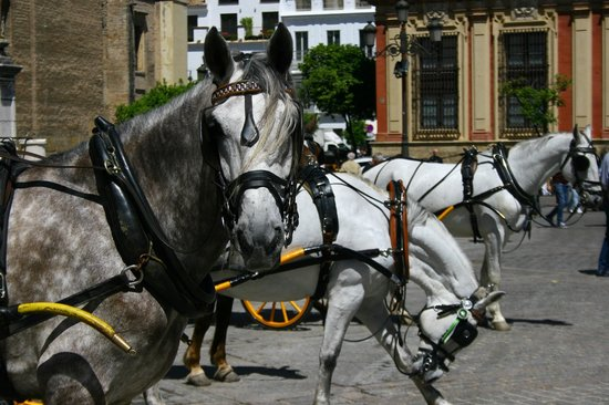 Catedral de Sevilla: Carrozze davanti alla Cattedrale