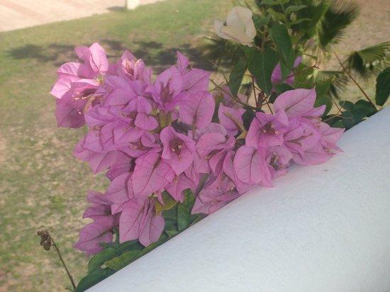 Djerba Plaza Hotel & Spa: très bien fleuri