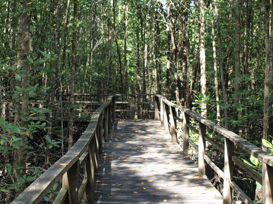 Kota Kinabalu Wetland Centre: A boardwalk with a view