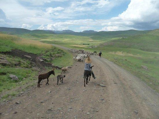 Semonkong Lodge : Lesotho, je kan eigenlijk gewoon gaan zitten en genieten van alles wat voorbij komt