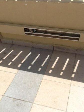 Daniel Dead Sea Hotel: electric 220v hazards