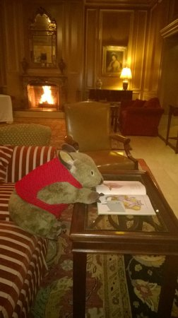 Sir Stamford at Circular Quay Hotel Sydney: Every hotel needs a wombat to read a bedtime story by an open fire