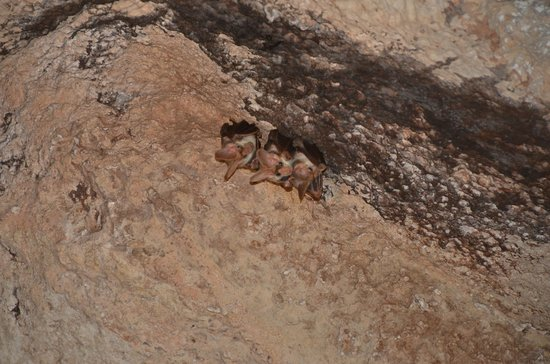 Cutta Cutta Caves Nature Park: residents hanging out