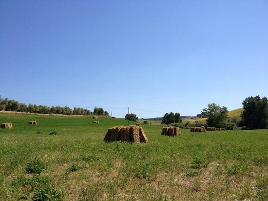Agriturismo da Remo: land