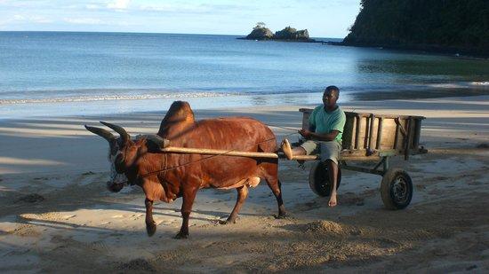 VOI Amarina resort: Pulizia mattutina della spiaggia
