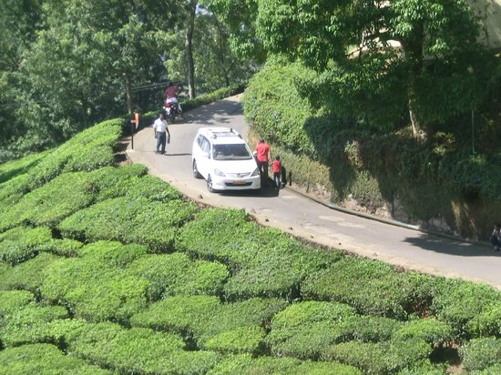 Club Mahindra Munnar: drive in