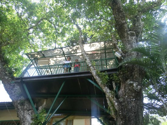 Club Mahindra Munnar : tree house