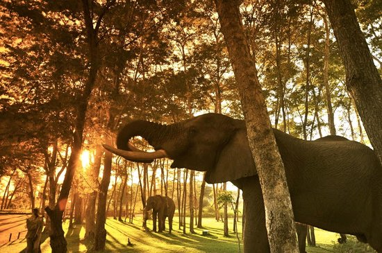 Victoria Falls, زامبيا: Elephants relaxing
