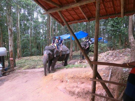Mattupetty Dam : elephant
