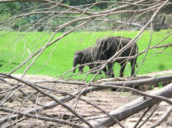 Mattupetty Dam : wild elephant view from boat ride