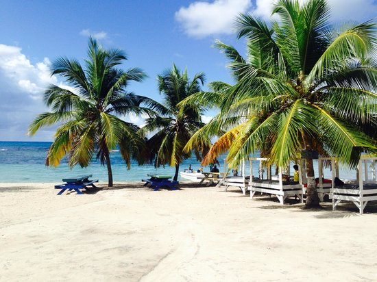 Viva Wyndham Dominicus Beach : Spiaggia