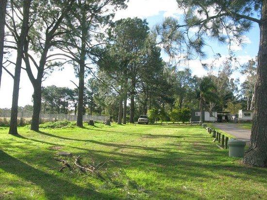 Bellhaven Caravan Park: Camping Area