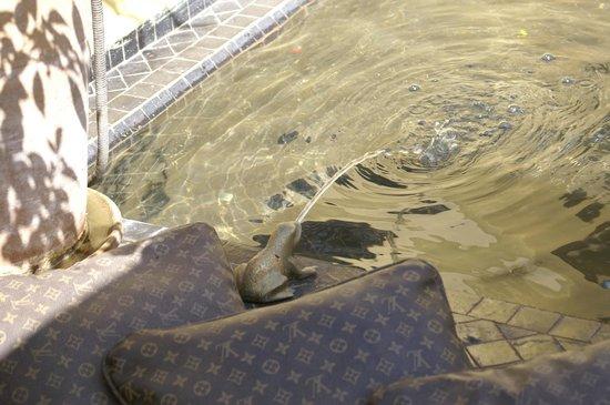 Riad 41: Wasserspiele