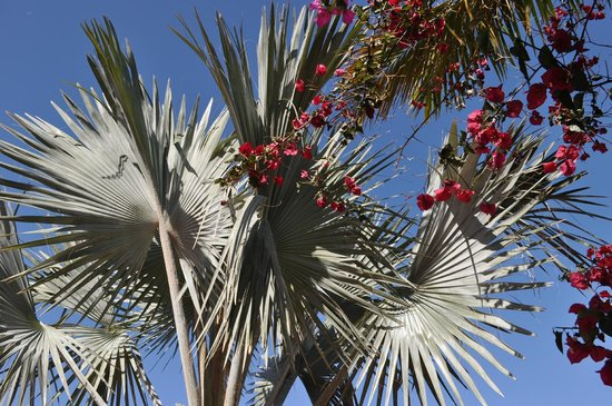 Be Live Family Costa los Gigantes: Typical plants around the hotel